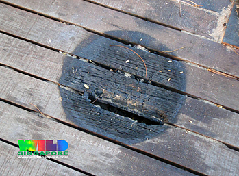 timber boardwalk fire burn marks resized 600