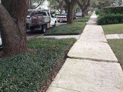 Cracking Sidewalk Tampa 2