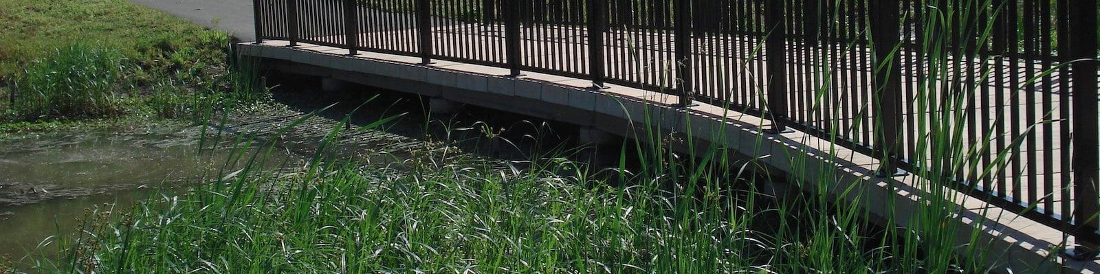 wetland_boardwalk_top_image.jpg