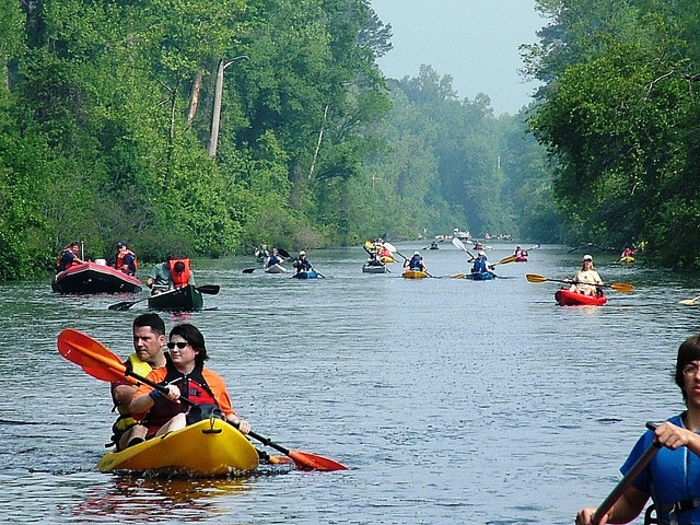 Dismal_Swamp_Canal_Trail_North_Carolina